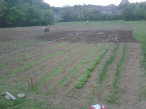 turnips, garlic and onions in the foreground   tiller and human labor in the background