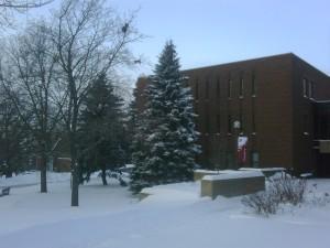 Snowy Pine outside my office